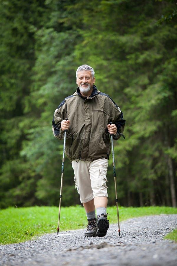 Download Senior Man Nordic Walking Outdoors Stock Image - Image: 17087083
