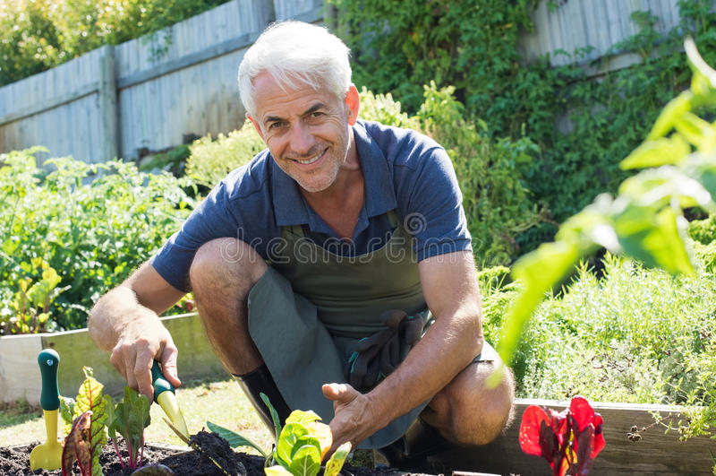 Senior man planting stock images