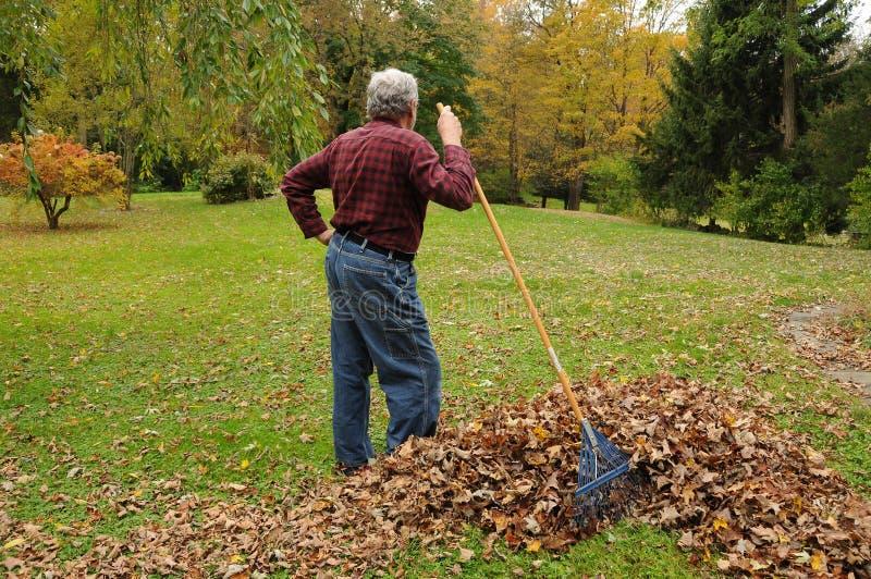 Download Senior Man Raking Leaves stock image. Image of land, season - 11458609