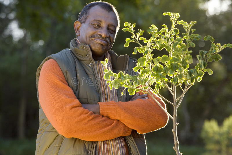 Senior man standing beside small tree in autumn garden, arms folded, smiling, side view, portrait royalty free stock photography