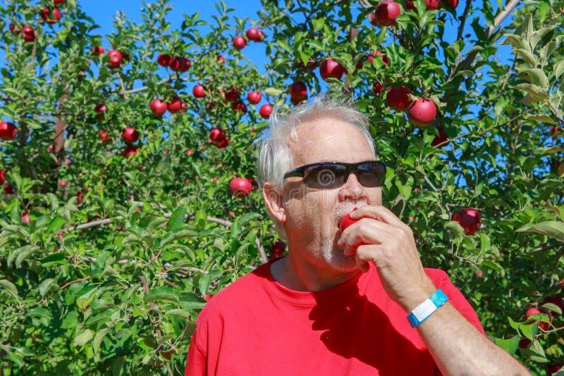 Senior Man Tasting Apple Picked from Tree royalty free stock photo