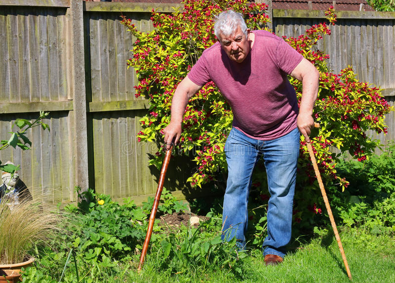 Senior man walking sticks or canes. Arthritis. A front view of a senior man using two walking sticks or canes having difficulty walking. Arthritis in legs and royalty free stock images