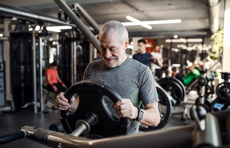 A senior man doing strength workout exercise in gym. Copy space. stock photo