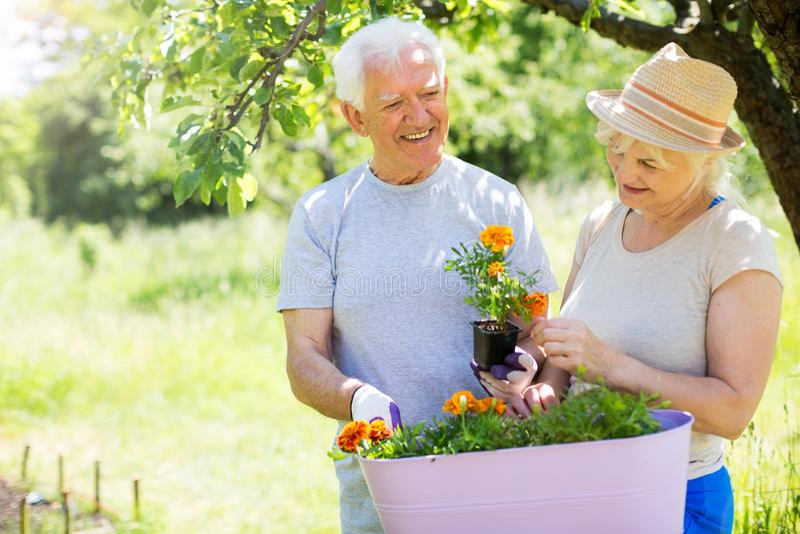 senior pary w ogrodzie fotografia royalty free