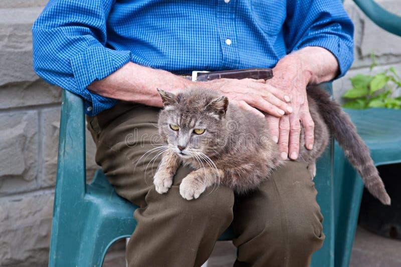Senior petting a cat stock image
