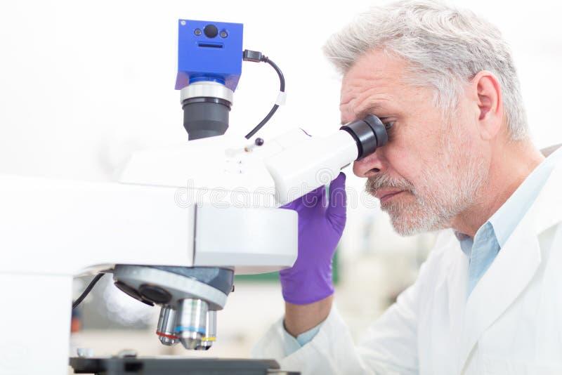Senior scientist microscoping in lab. stock photo