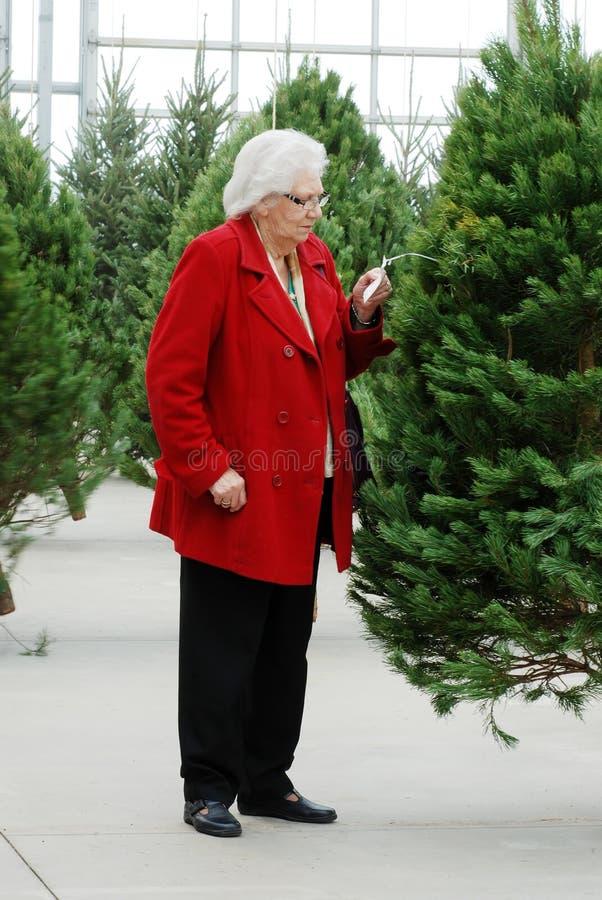 Senior shopping for christmas tree royalty free stock photos