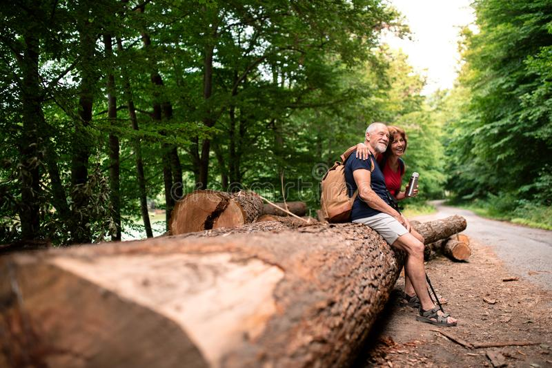 Senior tourist couple with backpacks in forest in nature, sitting on log. stock photos