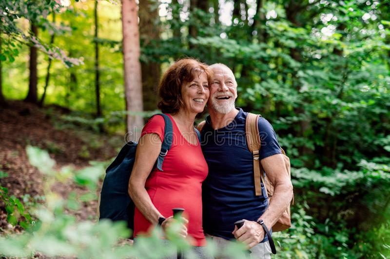 Senior tourist couple with backpacks on a walk in forest in nature. stock photo