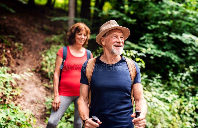 Senior tourist couple with backpacks on a walk in forest in nature. A senior tourist couple with backpacks on a walk in forest in nature royalty free stock photos