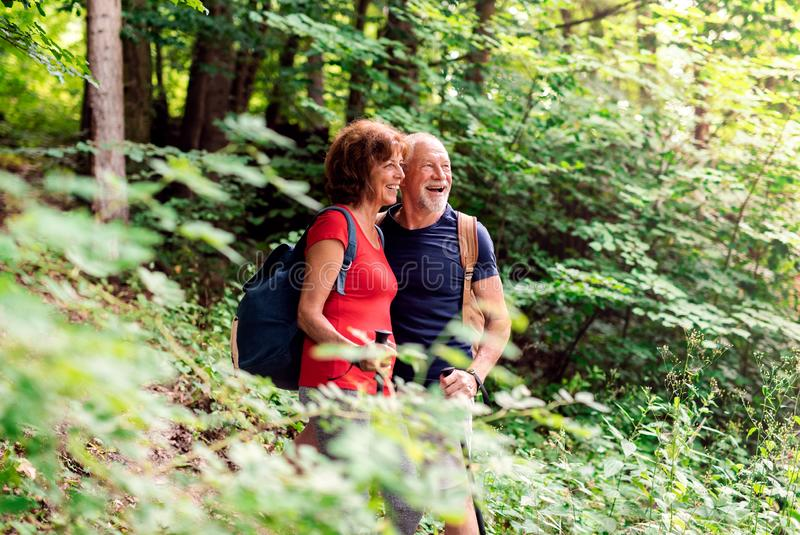 Senior tourist couple with backpacks on a walk in forest in nature. A senior tourist couple with backpacks on a walk in forest in nature royalty free stock photography