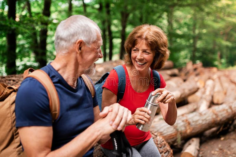 Senior tourist couple with flask on a walk in forest in nature, sitting. Senior tourist couple with steel flask on a walk in forest in nature, sitting stock photography
