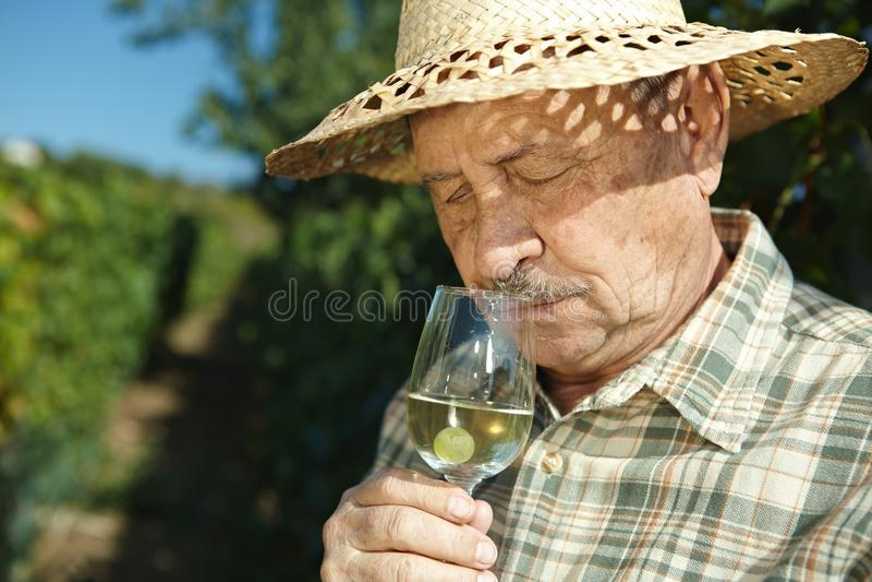 Download Senior Vintner Testing Wine Stock Photo - Image: 29845512