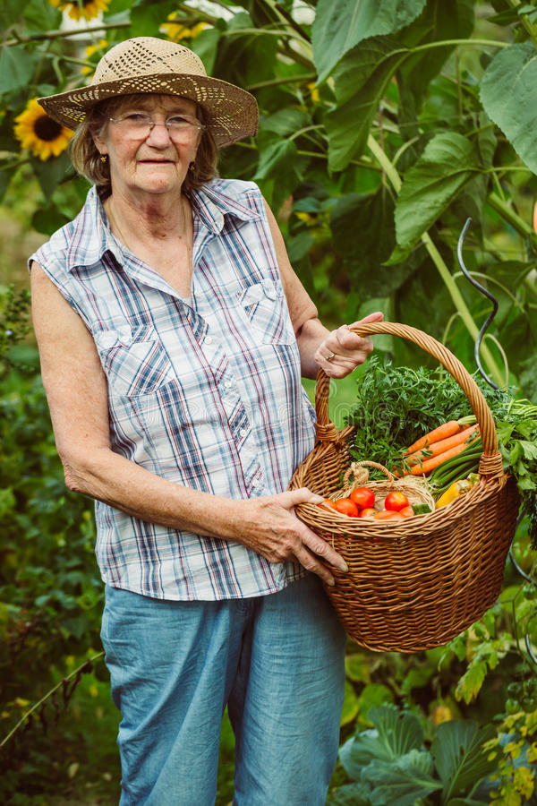 Senior woman with a basket of harvested vegetables stock photo
