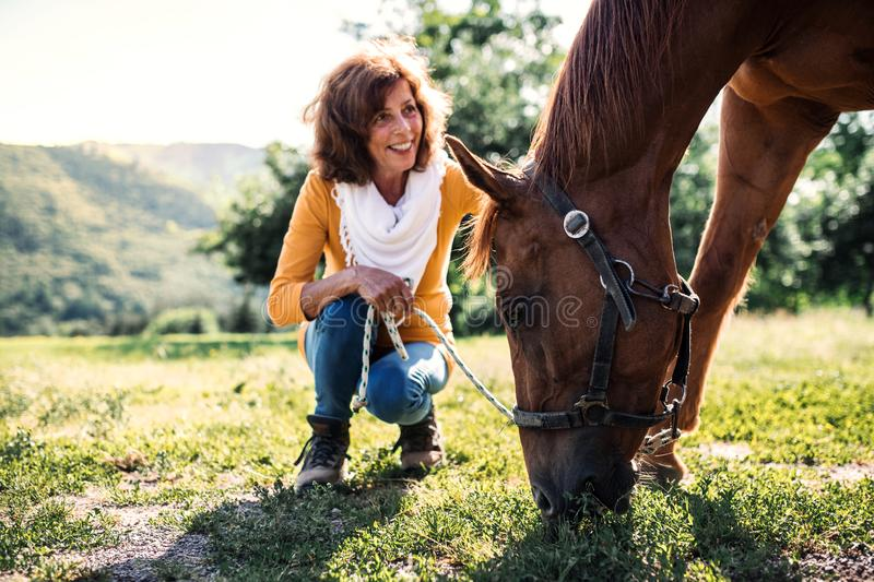 A senior woman crouching and a horse grazing by a stable. A happy senior woman crouching and a horse grazing by a stable stock photo