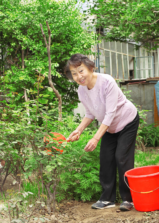A senior woman doing garden labor stock photography