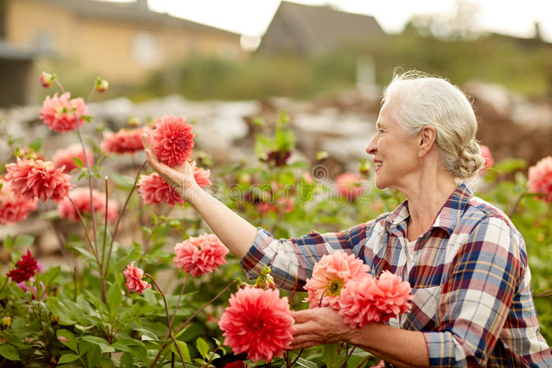 Senior woman with flowers at summer garden. Farming, gardening and people concept - happy senior woman with flowers blooming at summer garden royalty free stock image