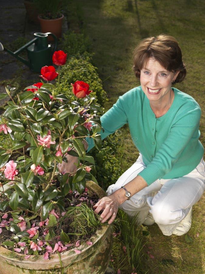 Senior woman gardening stock image