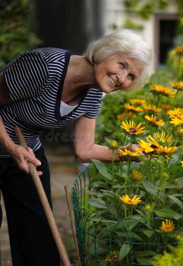 Senior woman gardening royalty free stock image