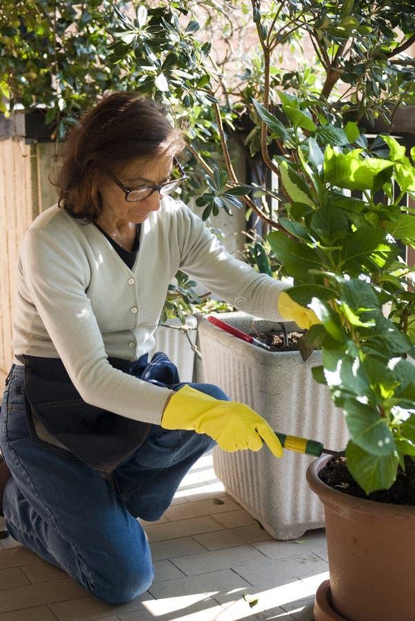 Senior woman gardening. Senior woman pruning her plants in terrace royalty free stock photo