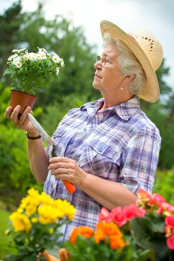 Download Senior woman gardening stock photo. Image of planting - 19760426