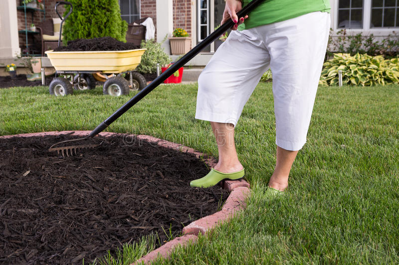 Senior woman mulching a flowerbed stock photography