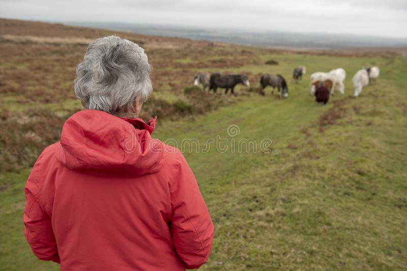 Senior woman overlooking wild horses on marsh land stock photo