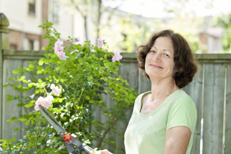 Senior Woman Pruning Rose Bush Royalty Free Stock Photography