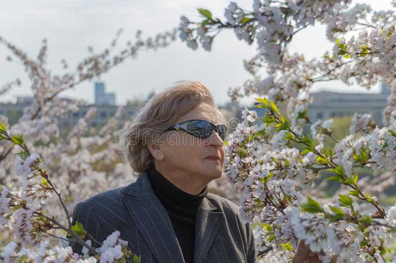 Senior woman between spring blossoms of Sakura or cherry tree flowers. Happy senior woman concept royalty free stock images