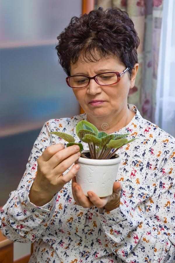 Senior woman taking care of plants at home, removing dead leaves from a plant, vertical. Senior woman taking care of plants at her home, removing dead leaves stock images