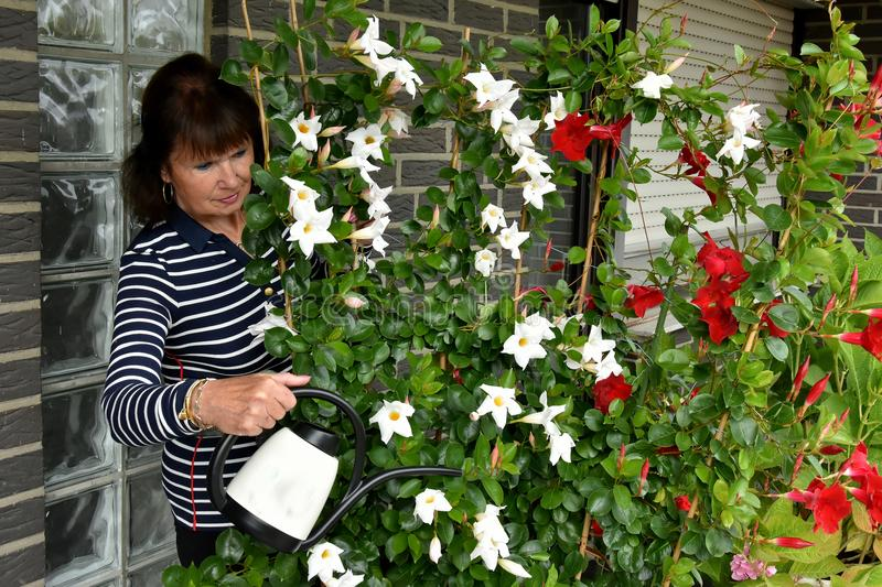 Woman watering flowers. Senior woman watering the beautiful flowers on her terrace stock images