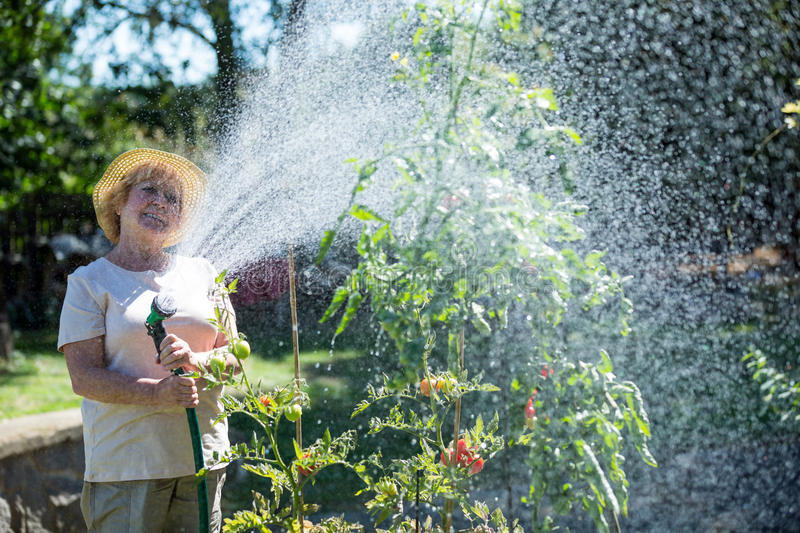 Senior woman watering plants with a hose stock photos