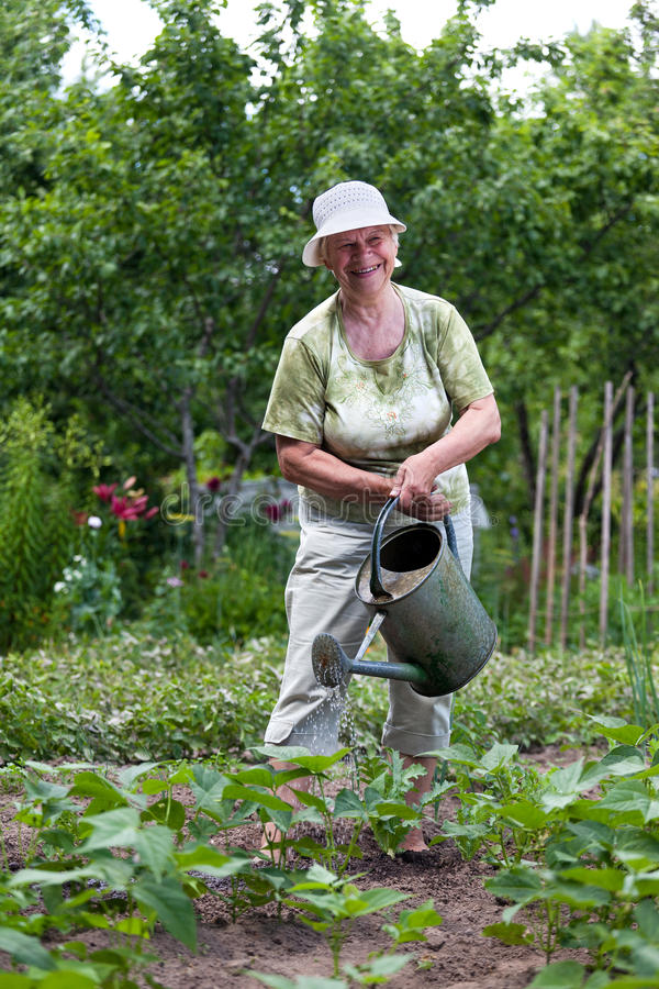 Senior woman working in garden royalty free stock photos