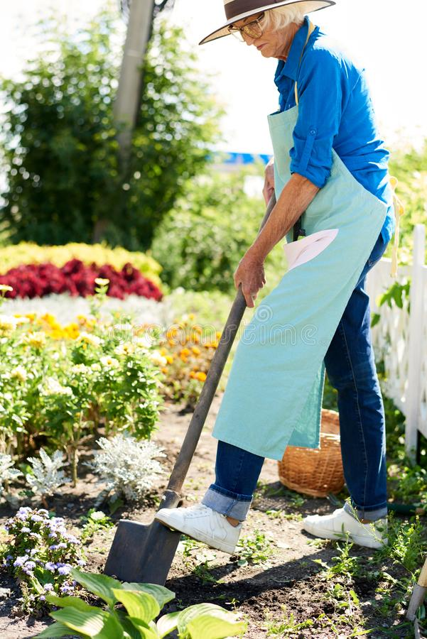 Senior Woman Working in Garden royalty free stock image