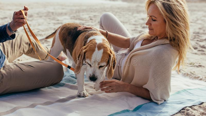 Mature couple relaxing on beach with a puppy stock photography