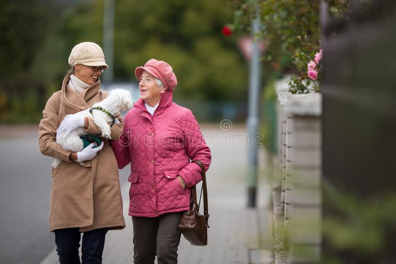 Senior woman walking her little dog with her granddaughter. Senior women walking her little dog on a city street with her granddaughter; looking happy and stock photo