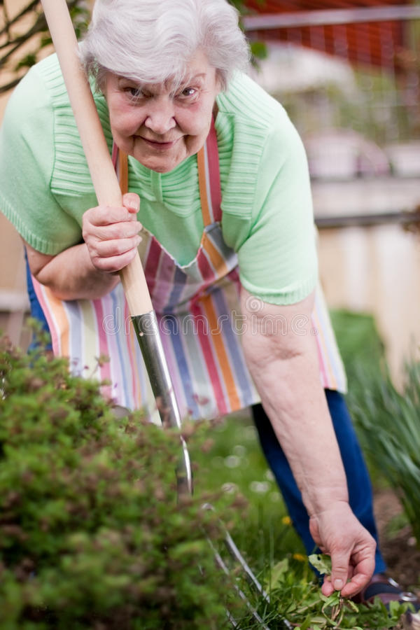 Senior At Work In The Garden Stock Image