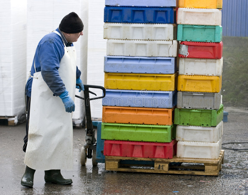 Senior worker. A senior worker in a fish processing factory, pulling a tray with plastic fish containers royalty free stock image