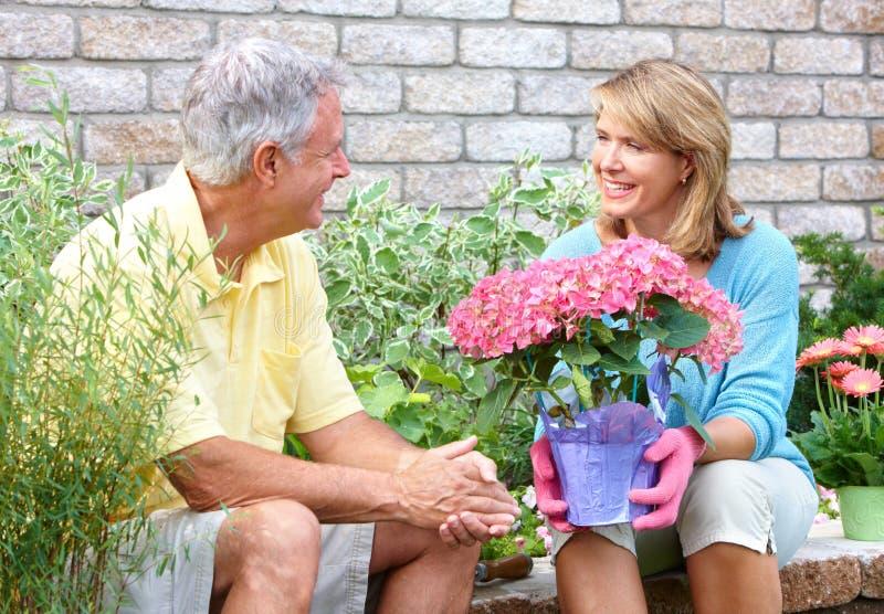 Seniors gardening stock photo