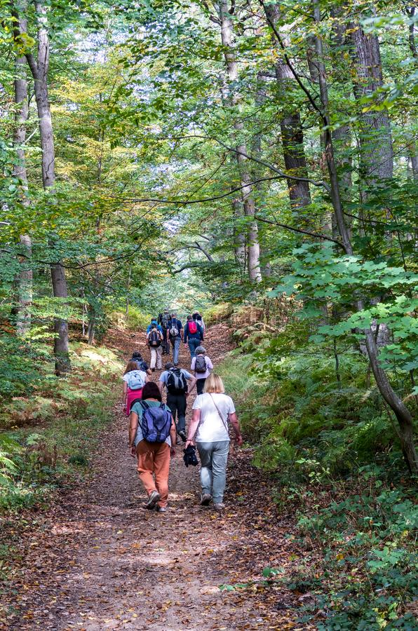 Seniors group hiking in the forest in autumn - Saint Germain Forest, France. stock images