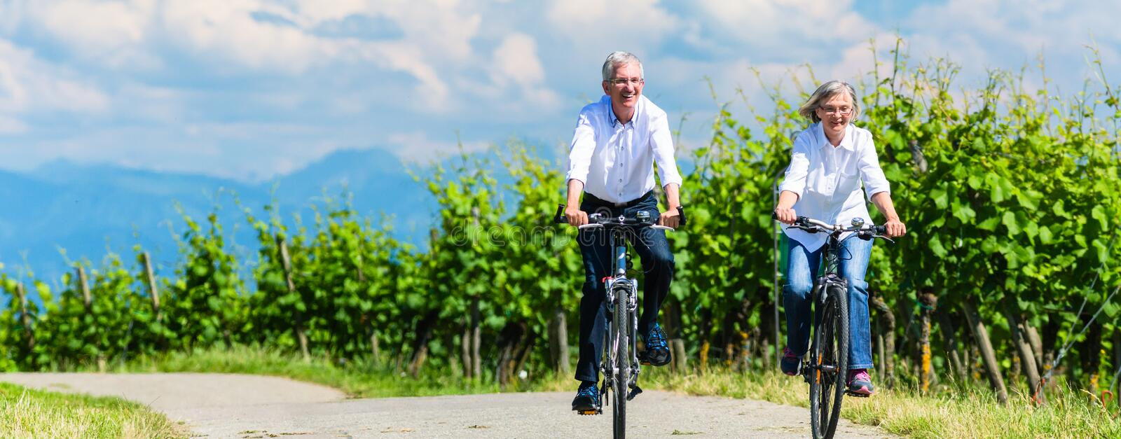 Seniors riding bicycle in vineyard together. Panorama picture
