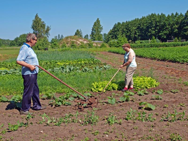 Seniors work in garden 2. Seniors couple working with hoe and hand tiller in garden stock photos