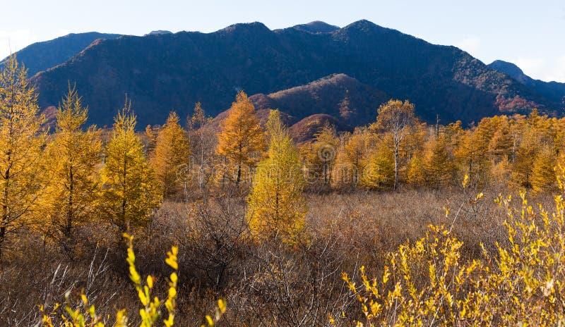 Senjogahara的金黄领域 图库摄影