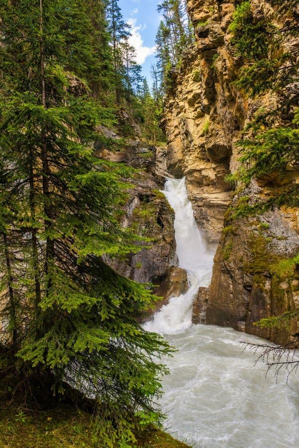 Senken Sie Fälle in Johnston Canyon, Nationalpark Banffs, Kanada stockfotos