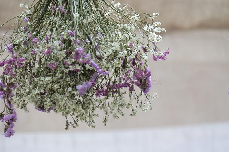 In senlective focus a bunch of white purple statis flower blossom hanging from a room ceiling. In senlective focus bunch white purple statis flower blossom stock images