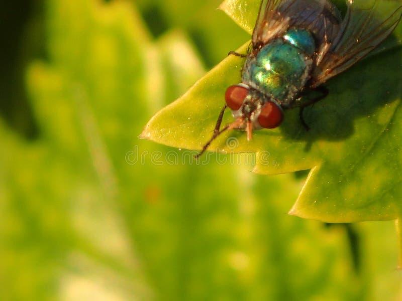 Sens vert de feuille d'insecte image libre de droits