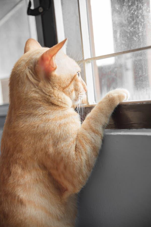 Sensação amarela do gato só na janela imagem de stock
