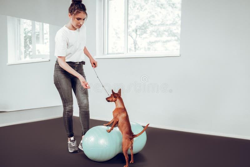 Sensación del amante del perro implicada en jugar con su perro imagen de archivo