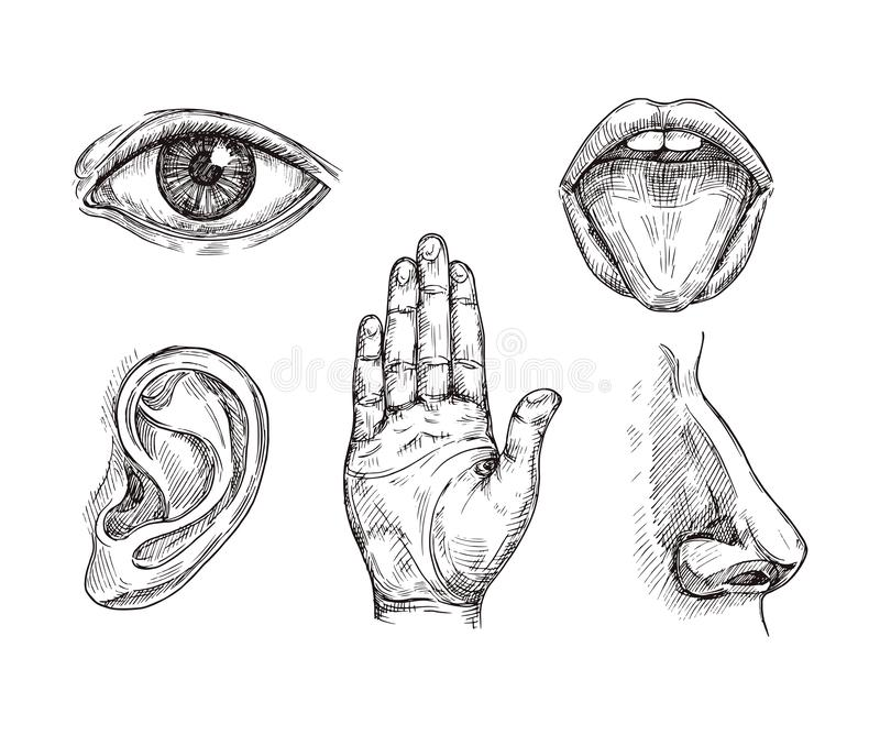 Sense organs. Hand drawn mouth and tongue, eye, nose, ear and hand palm. Engraving five senses vector illustration stock illustration