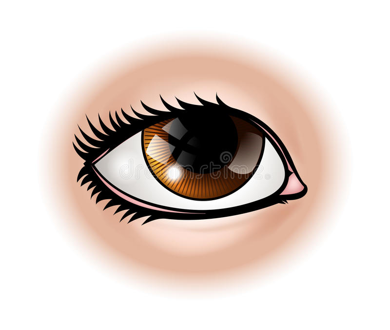 Eye Body Part stock illustration